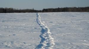hiver 2008 046