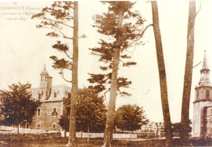 Les grands pins du cap Lauzon...