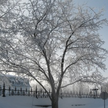 hiver 2008 059