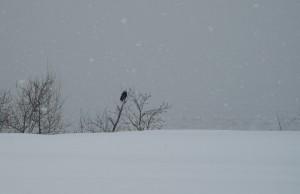 hiver-2008-043